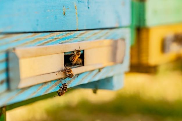 Bijen die uit de bijenkorf vliegen om stuifmeel voor honing te brengen