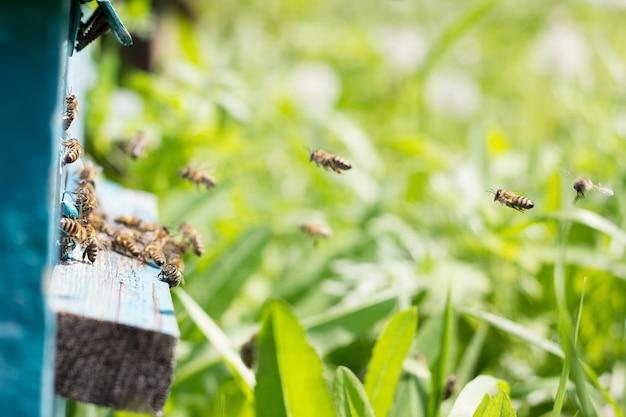 Bijen dragen nectar naar de korf