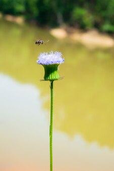 Bijen en prachtige bloemen
