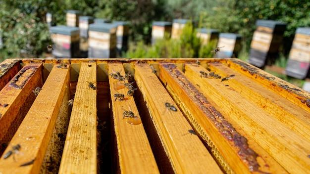 Bijen in een kam honing produceren selectieve aandacht geschoten op bijen