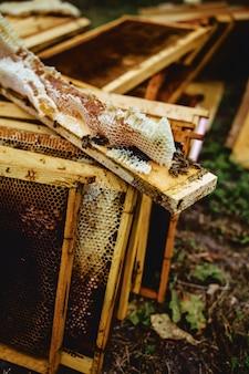 Bijen in het kader van de korf