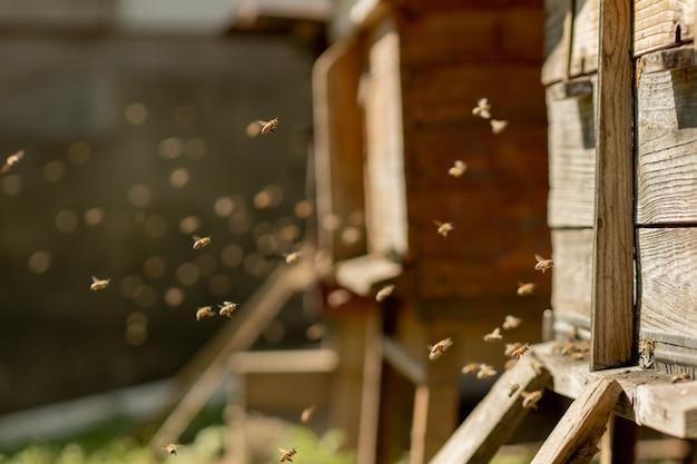 Bijen keren terug naar de bijenkorf en gaan de bijenkorf binnen met verzamelde bloemennectar en stuifmeel. zwerm bijen die nectar van bloemen verzamelen. gezonde biologische boerderijhoning.