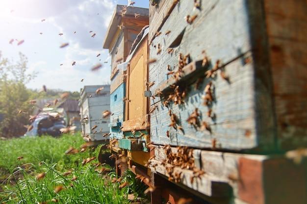 Bijen op een houten korf
