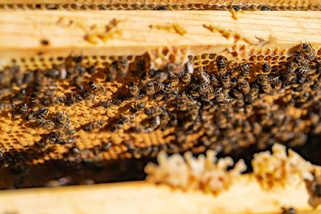Bijen op honingraat in bijenstal