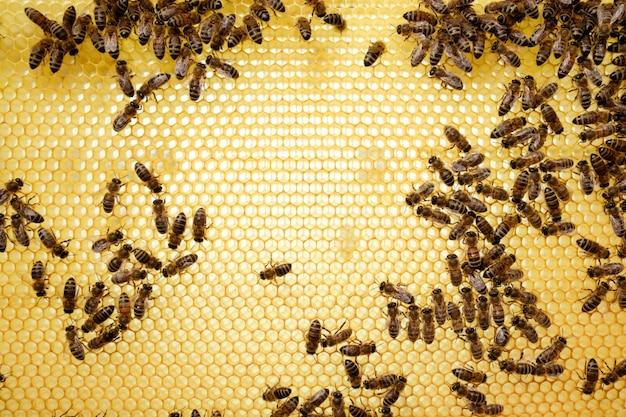 Bijen op honingratenachtergrond