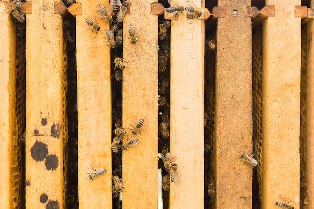 Bijen op hout