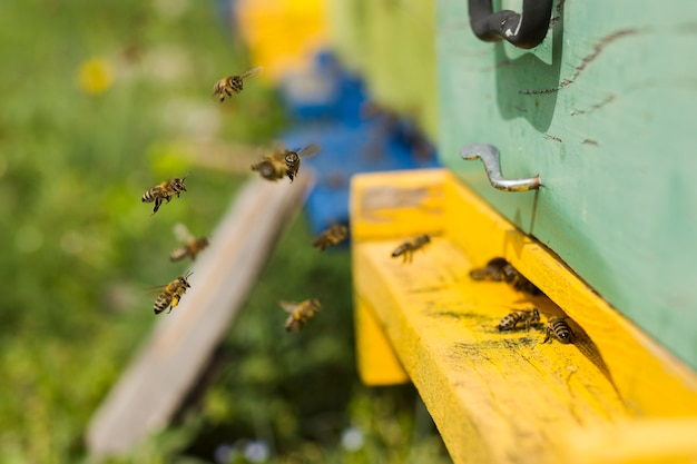 Bijen op houten doos