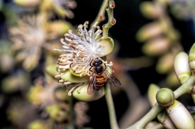 Bijen op palmbloesems