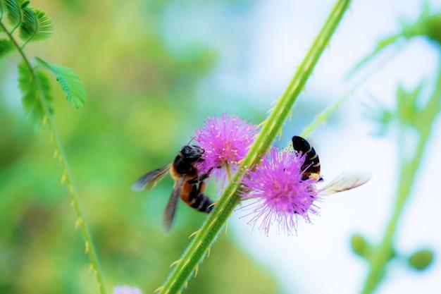 Bijen op stuifmeel in het bos.
