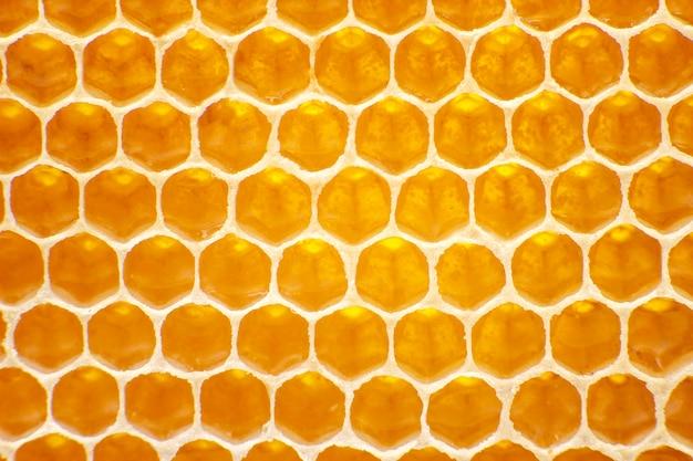 Bijen verse honing in kammen. achtergrond en textuur. vitamine natuurlijk voedsel. bijenwerk product