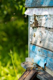 Bijen vliegen de ingang van de korf binnen. bijen vliegen rond bijenkorf. bijenteelt concept. ruimte kopiëren. selectieve focus