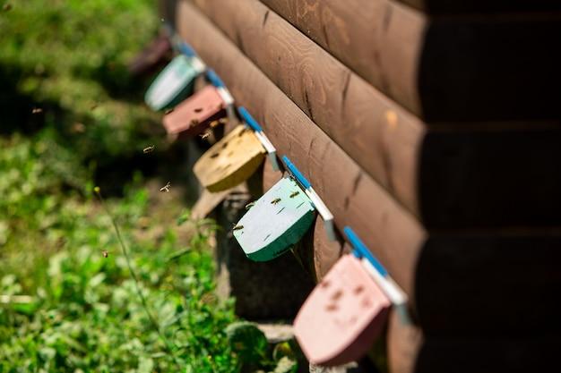 Bijen vliegen een wellnesshuis in om te slapen
