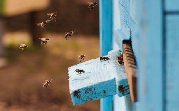 Bijen vliegen naar de korf