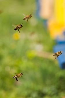 Bijen vliegen