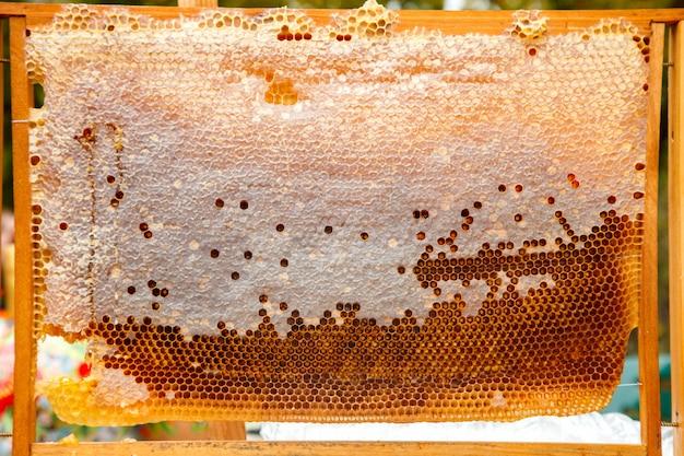 Bijen werken aan honingraat met zoete honing