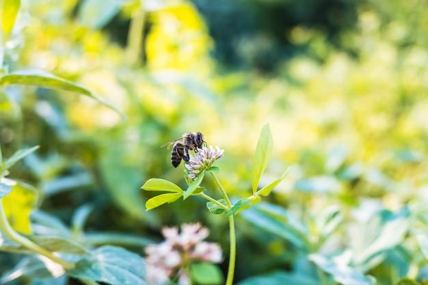 Bijen worden met uitsterven bedreigd door pesticiden en monoculturen, ze zijn nodig om planten te bestuiven.