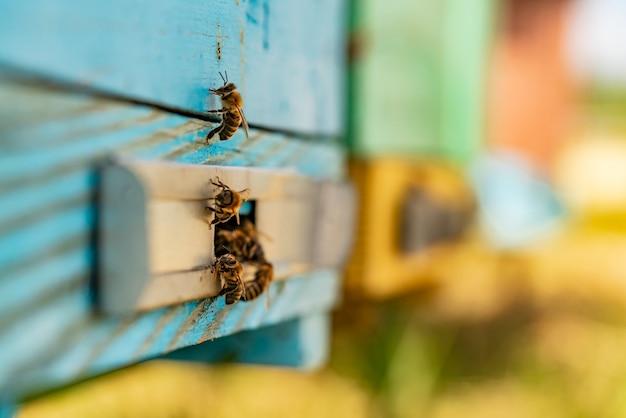 Bijen zwermen bij de ingang van de korf