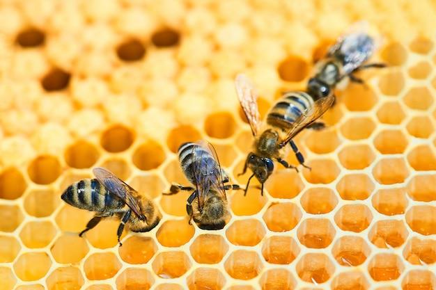 Bijenbijenkorf op een honingraat