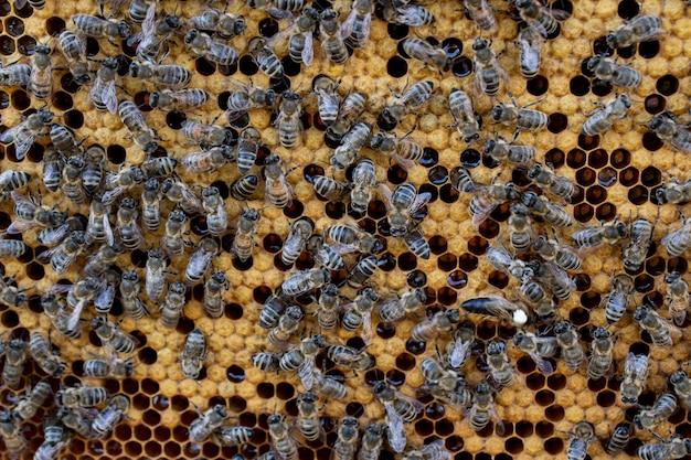 Bijenhouten frame met bijen en honingraat, honingwascellen, veel insecten