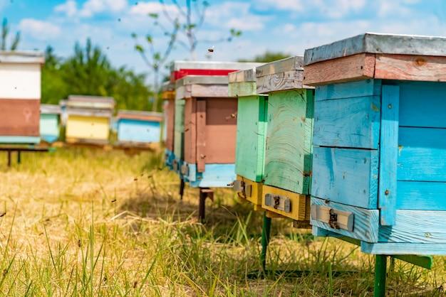 Bijenkasten in een bijenstal met bijen die naar de landingsplanken in een groene tuin vliegen