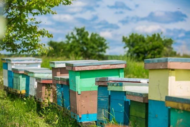 Bijenkorven in de bijenstal. bijen klaar voor honing. bijenteelt