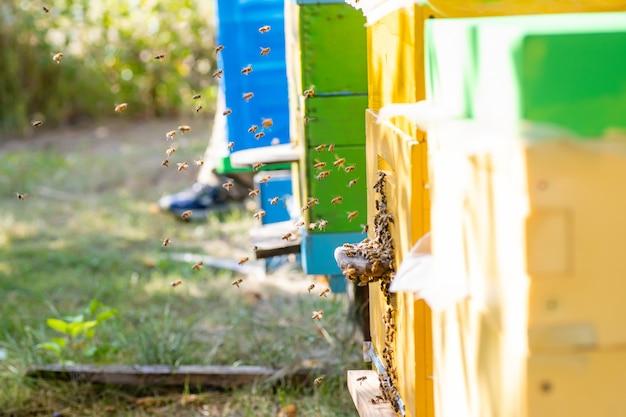 Bijenkorven in de bijenstal met bijen vliegen naar landingsplanken in de groene tuin