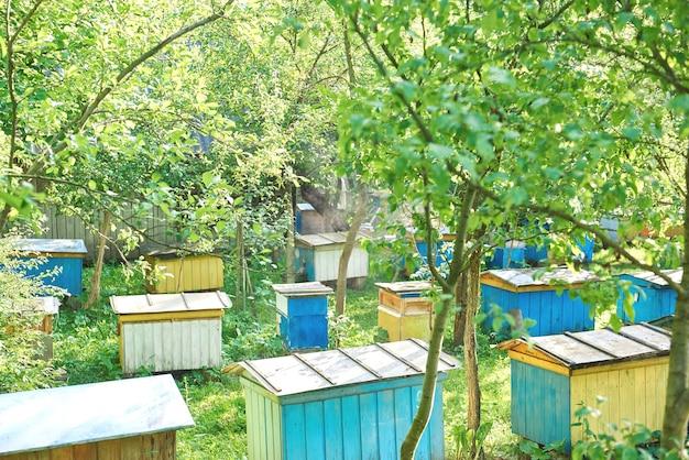 Bijenkorven in een bijenstal buiten