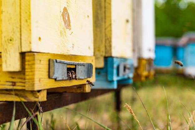 Bijenkorven in een bijenstal met bijen die naar de landingsplanken in een groene tuin vliegen