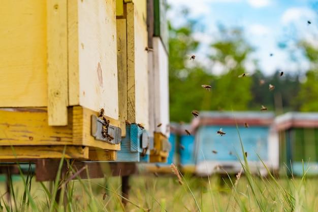 Bijenkorven in een bijenstal met bijen die naar de landingsplanken vliegen in een groene tuin