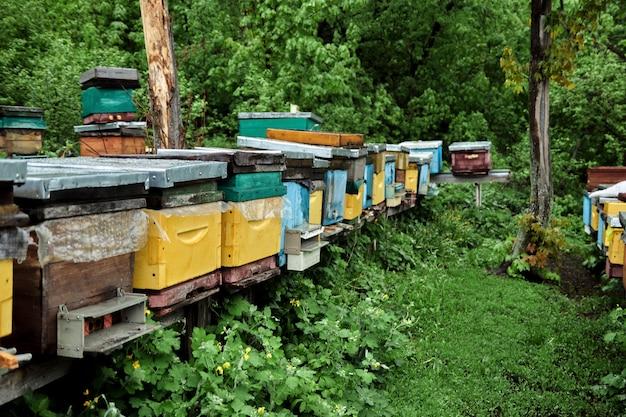 Bijenkorven met bijen in de bijenstal