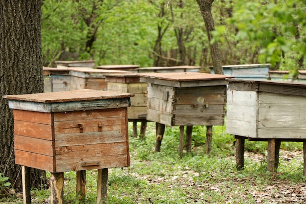 Bijenkorven met bijen in een bijenstal in de bos, horizontale foto