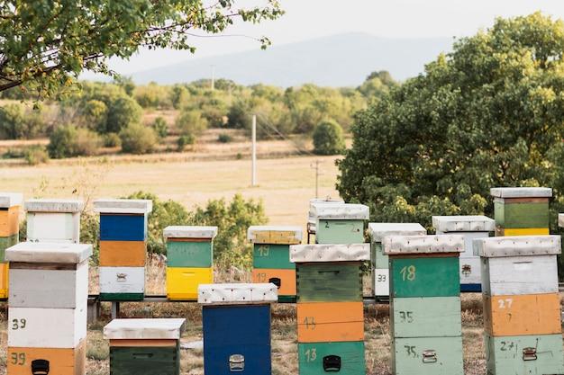 Bijenkorven met bomen in een natuurlijk landschap