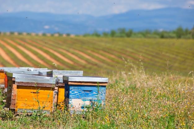 Bijenkorven op het lavendelveld in de provence, frankrijk. horizontaal schot
