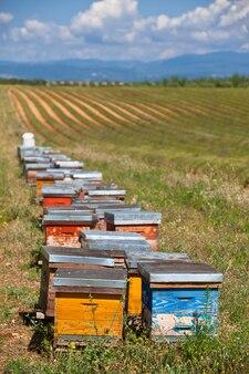 Bijenkorven op het lavendelveld in de provence, frankrijk