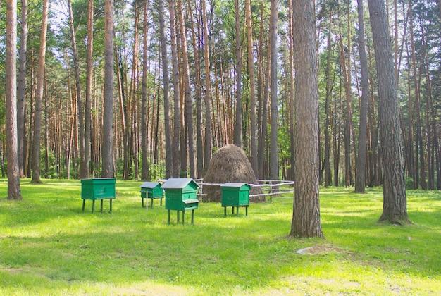 Bijenkorven staan op een groene weide in het bos