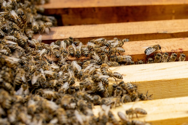 Bijenkorven voor de verzorging van bijen met honingraten en honingbijen. imker opende bijenkorf om een leeg frame met was op te zetten voor honingoogst.