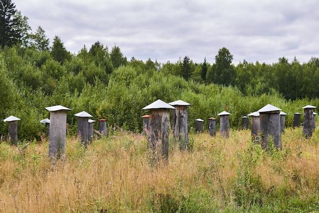 Bijenstal voor fok- en selectiewerk met traditionele bijenkorven - bee gums of log kasten