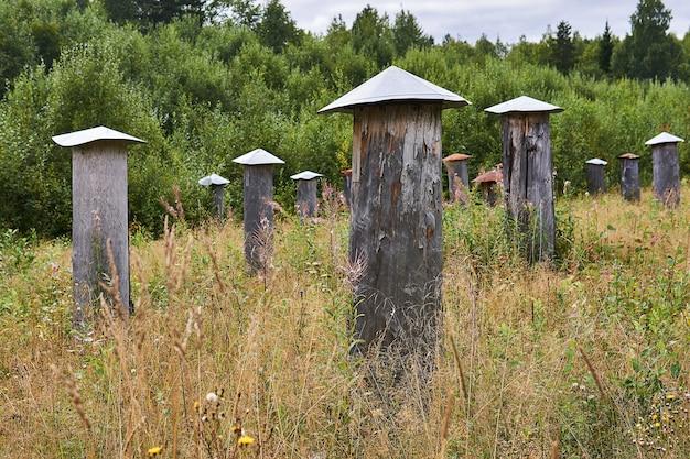 Bijenstal voor het werken met wilde bijen met traditionele bijenkorven - bee gums of log kasten