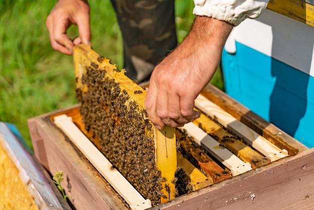 Bijenteelt plaatst een frame met honingraten in een bijenkorf voor bijen in de tuin in de zomer.