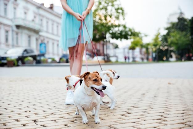Bijgesneden afbeelding van een vrouw en haar honden tijdens wandeling in de stadsstraat
