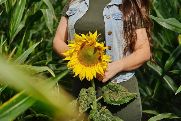 Bijgesneden afbeelding van een vrouw in maïsveld met zonnebloem in handen
