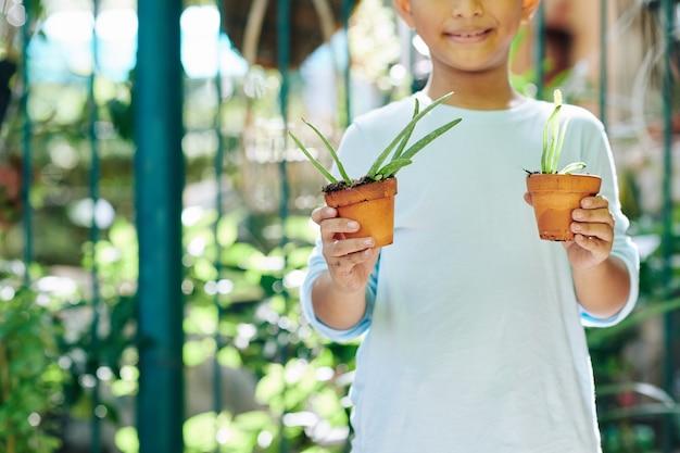 Bijgesneden afbeelding van lachende gelukkige jongen met twee potten met aloë vera planten