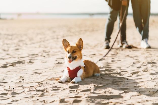 Bijgesneden afbeelding van mensen die in strand met hond lopen.