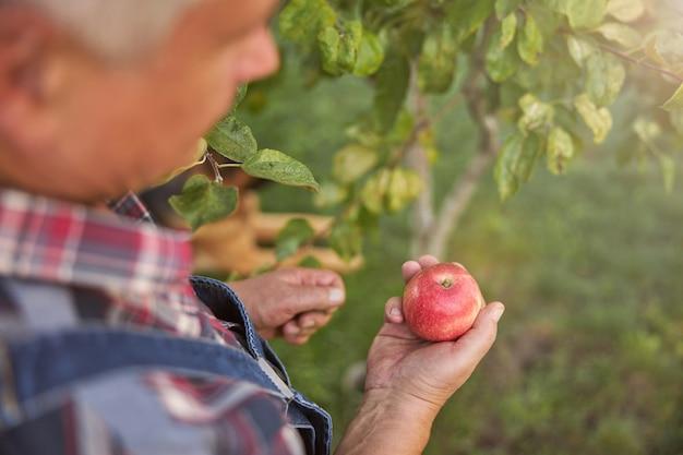 Bijgesneden foto van een grijsharige man die een geruit overhemd draagt en een rode appel vasthoudt uit zijn boomgaard