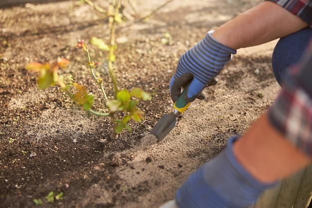 Bijgesneden foto van een hand van een tuinman die grond graaft in de buurt van een plant met een minischop