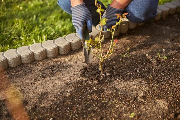 Bijgesneden foto van een tuinman die handschoenen draagt en met een kleine schop in de grond graaft