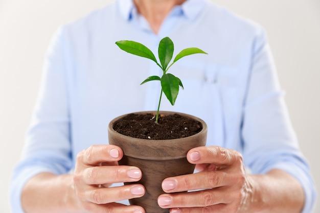 Bijgesneden foto van vrouwelijke handen met bruine pot met jonge boom