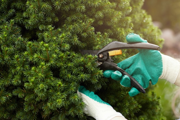 Bijgesneden weergave van tuinieren werknemer beschermende handschoenen dragen tijdens het trimmen van planten