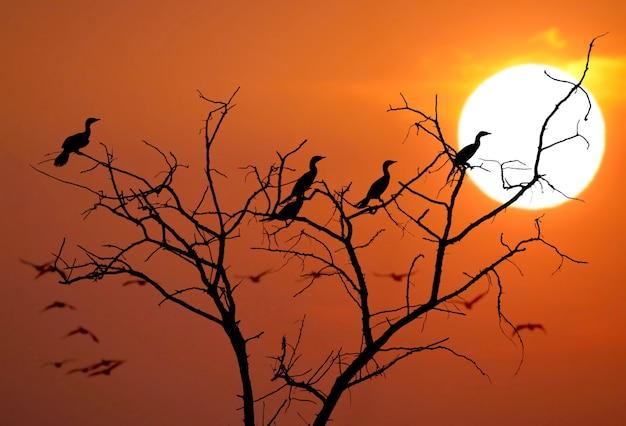 Bijna een abstracte foto van de silhouetten van vogels op de zonsondergang