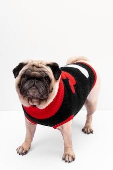 Binnenlandse hond die kleding draagt